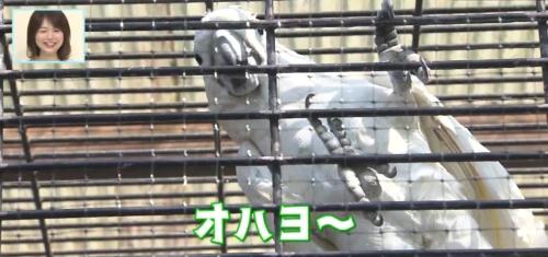 バリはやッ!ZIP!福岡市動物園