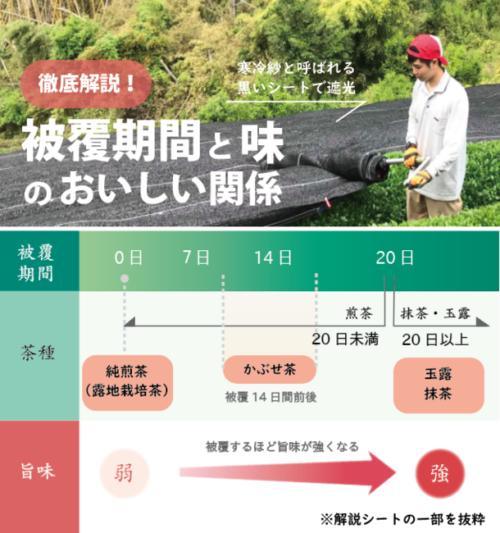 「宇治茶ティラミスセブン~玉露スペシャル~」