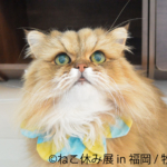 ねこ休み展 in 福岡