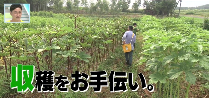 TOYO'Sキッチン 大石ファーム