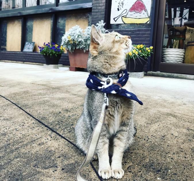 猫 玄米工房sweetsある