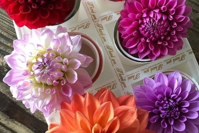 Chou fleur 花