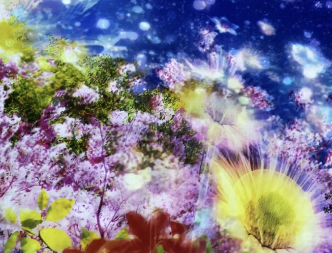 佐賀県庁 佐賀県×ネイキッド 星空の庭園 プロジェクションマッピング