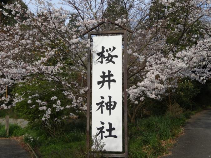 櫻井神社 桜