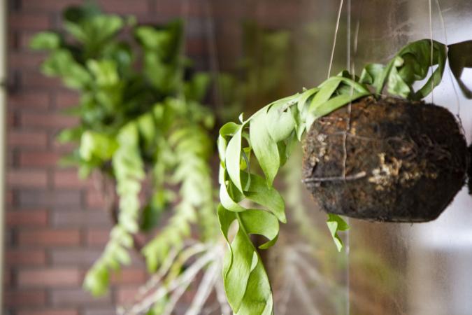 ヤキチ2号店 壁の植物ディスプレイ