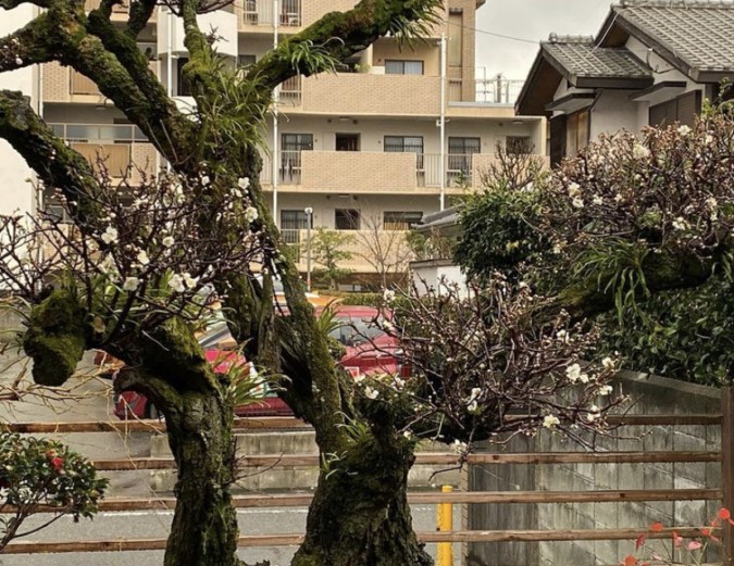 ごはんとおやつ うめや 梅の木