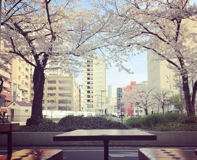 Gaogao (ガオガオ) 春