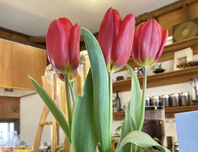 NIYOL COFFEE(ニヨルコーヒー) 季節の花