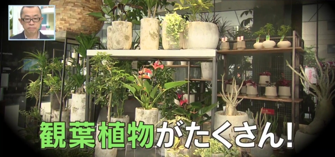 YAKUIN 3 TERRACE 観葉植物