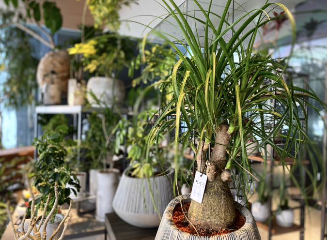 「YAKUIN 3 TERRACE」観葉植物