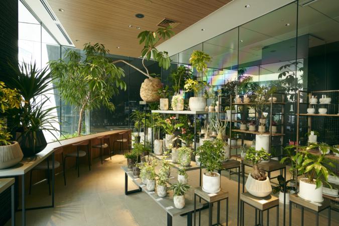YAKUIN3TERRACE(薬院スリーテラス) 店内 観葉植物