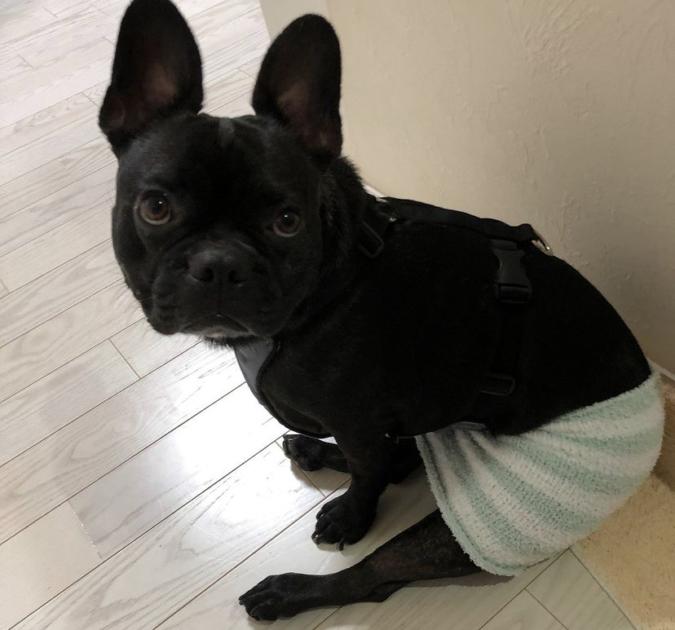 Ichi Cafeオーナーの愛犬