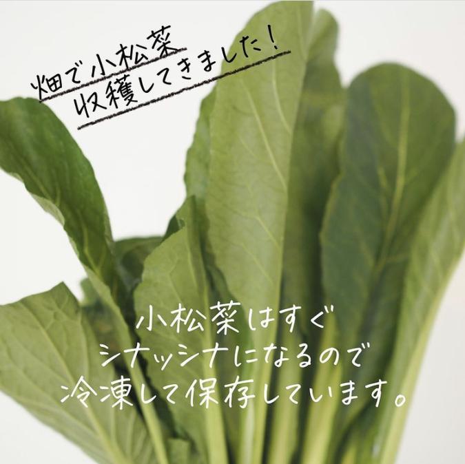 葉物野菜の冷凍保存
