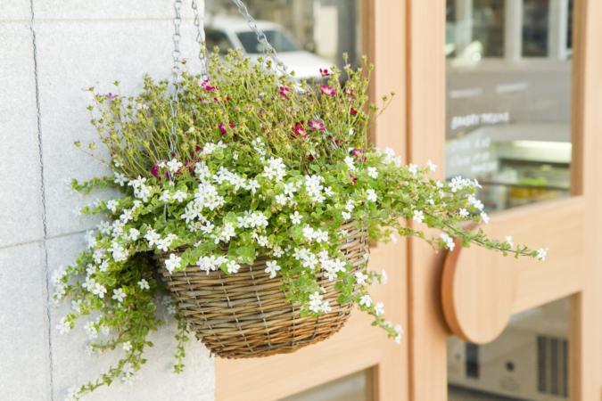 BAKERYタツヤ入口の花