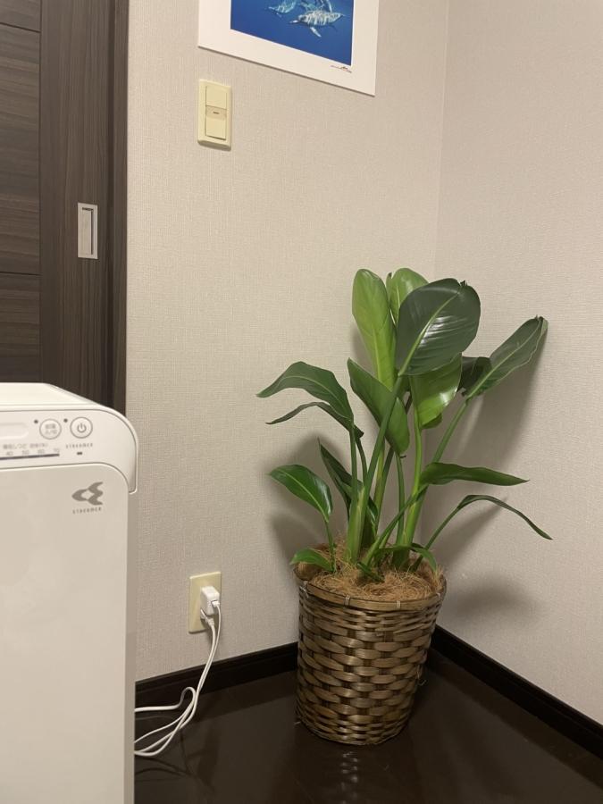 寝室に環境植物「オーガスタ」を設置