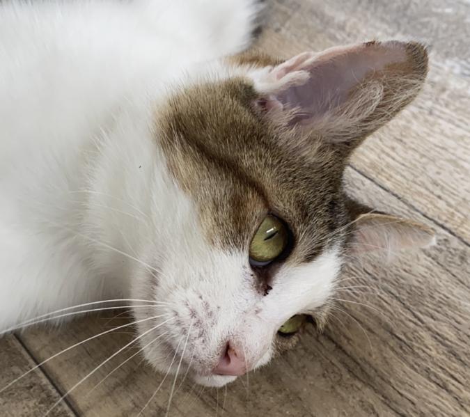 猫野食堂(ねこのしょくどう)保護猫