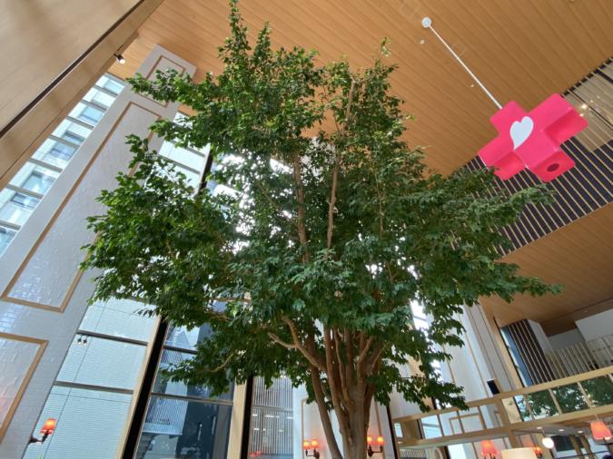 rejoyce(リジョイス)ベンジャミンの木