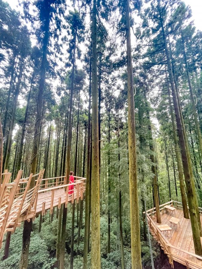 『森のカフェ 緑の詩〜みどりのおと〜』ツリーハウス